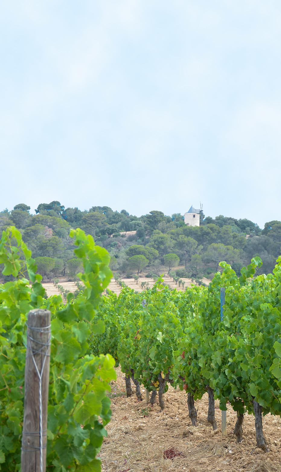 porquerolles domaine viticole