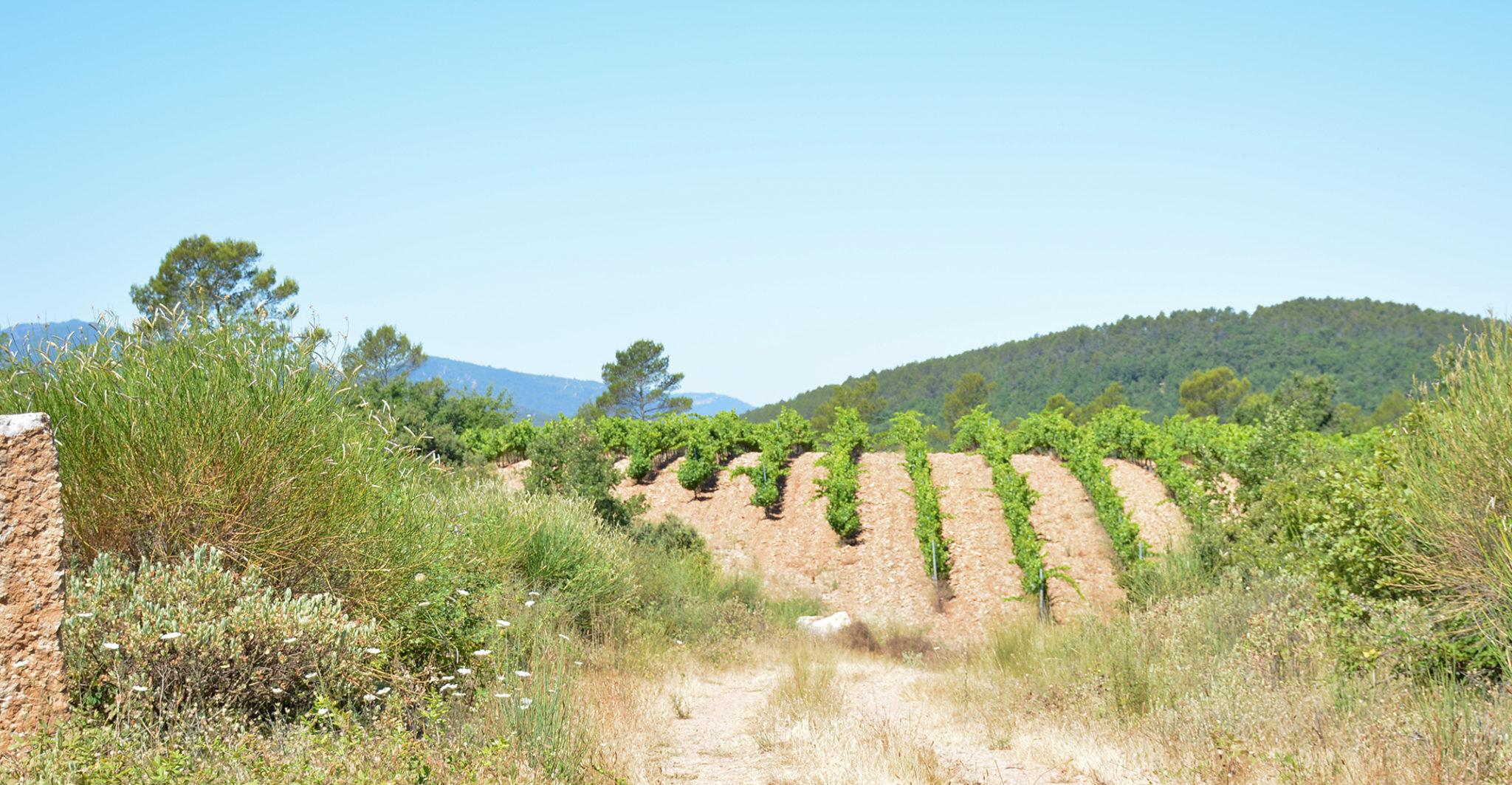 vigne bio la lieue