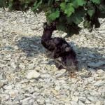 Chateau de Sancerre: une merveille pour les amoureux du Sauvignon