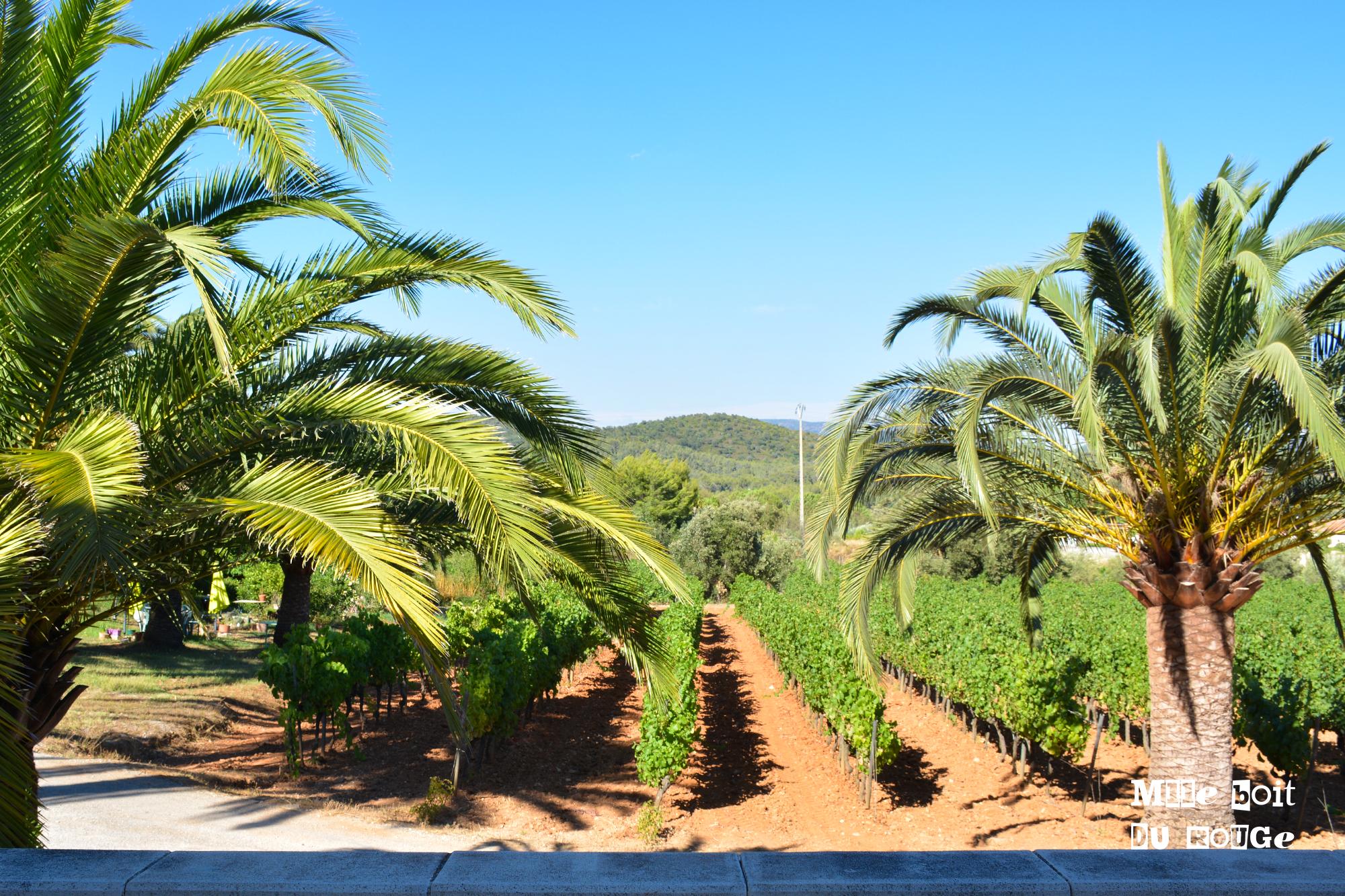 Château Sainte Marguerite : des vins hautes coutures au coeur d'une palmeraie